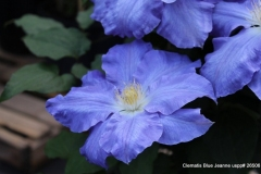 Clem-Blue-Jeanne-4-001
